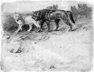 Blanka a Lobo na Setonovej kresbe